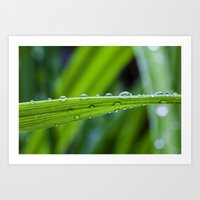 Spring Rains Art Print