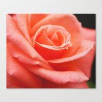 Peach Delight. Canvas Print