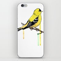 Goldfinch iPhone & iPod Skin
