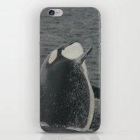 Orca Whale iPhone & iPod Skin