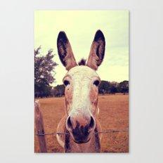a curious donkey. Canvas Print