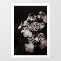 Black And White Botanica… Art Print