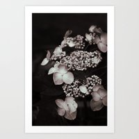 Black And White Botanica… Art Print