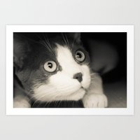 What do you think Mr Cat? Art Print
