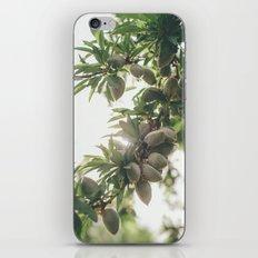 Almond Tree iPhone & iPod Skin