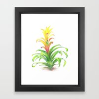 Bromeliad - Tropical Pla… Framed Art Print