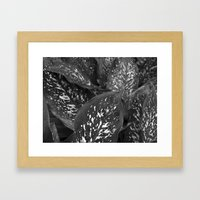 After The Rainfall II Framed Art Print