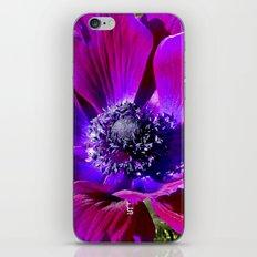Burgundy Poppy Anemone I iPhone & iPod Skin