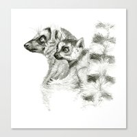 Maki catta and cub Canvas Print