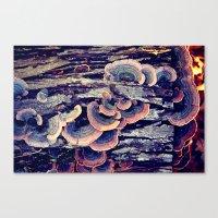 Wood Mushrooms Canvas Print