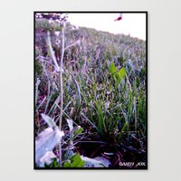A Violet Day Canvas Print