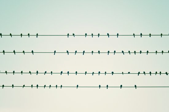 Birds on Four Wires  Art Print