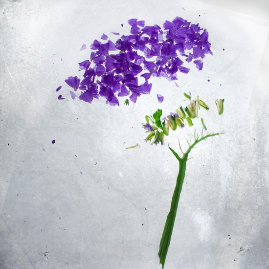 Botanical Blueprints - Statice Art Print