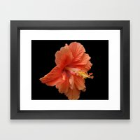 Double Orange Hibiscus DPG160419 Framed Art Print