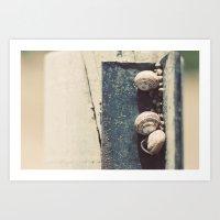 Snail Family Art Print