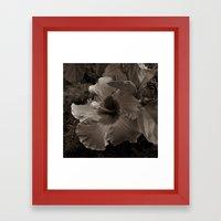 Chocolate Hibiscus Framed Art Print