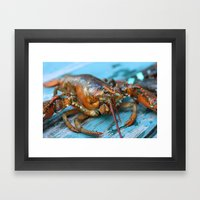 Maine Lobster Framed Art Print
