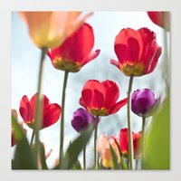 Tulip Series 5 Canvas Print