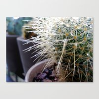 Martha The Cactus  Canvas Print