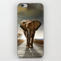 Elephant cover iPhone & iPod Skin