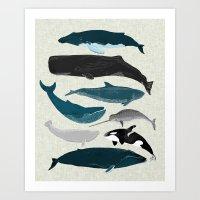 Whales and Porpoises sea life ocean animal nature animals marine biologist Andrea Lauren Art Print