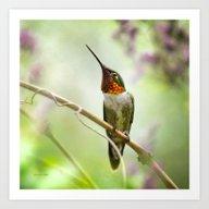 Hummingbird Passion Art Print