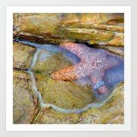 Tidepool Starfish Art Print