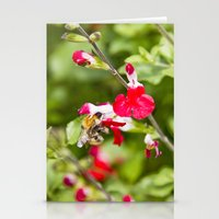 Busy bee in the flowers Stationery Cards