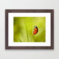 On top of a Grass Framed Art Print