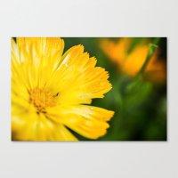 Macro Yellow Flower Canvas Print