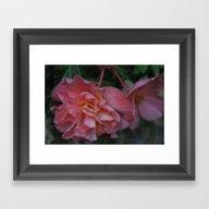 Roses At Night Framed Art Print