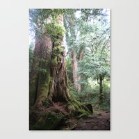Ancient Tree Canvas Print