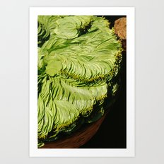 Betel Nut Leaves Art Print