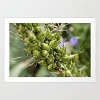 Extreme Perspective Plant Stem Art Print