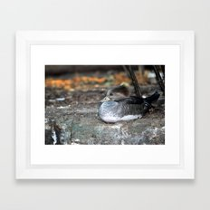 Sleepy Eyes Framed Art Print