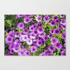 Purple Daisies Canvas Print