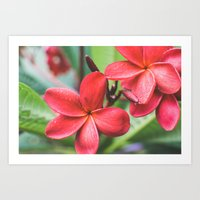 Soft Summer Plumeria Art Print