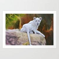 Rare White Lion  Art Print