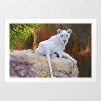 Rare White Lion  Art Print