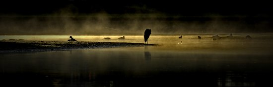 Herons in the Mist Art Print