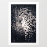 Waiting Cheetah Art Print