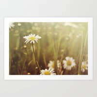 A Daisy Day Art Print