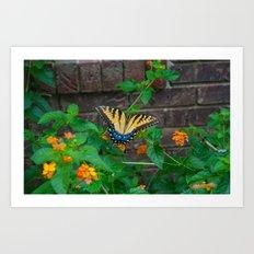Summer Butterfly Art Print