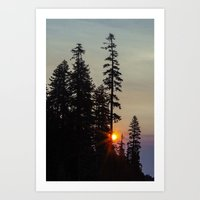 Oregon Trees Art Print
