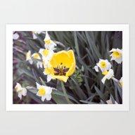 Spring Flowers Series 39 Art Print