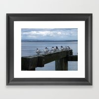 Auckland Birds  Framed Art Print
