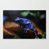 Blue Poison Dart Frog Azureus Canvas Print