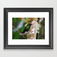 Ecuadorian Hummingbird 2… Framed Art Print