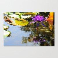 Cliche Waterlily Shot Canvas Print