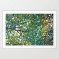forest 013 Art Print